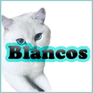 Nombres para Gatos Blancos y Albinos