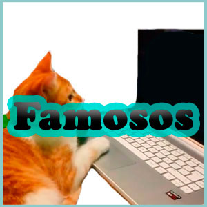 Nombres famosos para gatos
