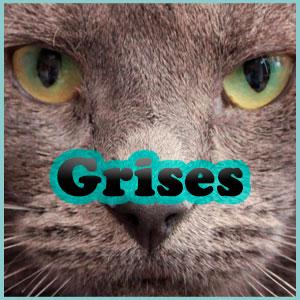 Nombres para los gatos grises Inicio
