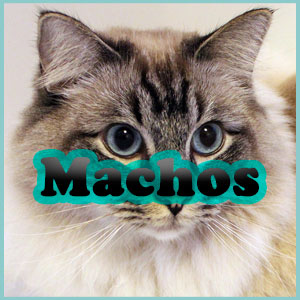 Nombres de gatos machos