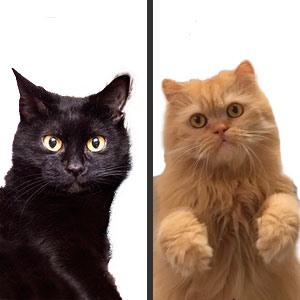 Nombres Unisex para Gatos