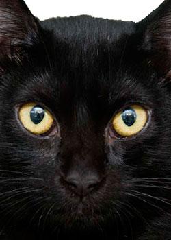 Nombres para Gatos Negro
