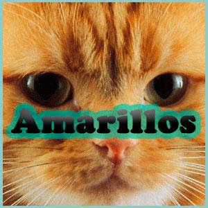 Nombres para gatos amarillos Inicio