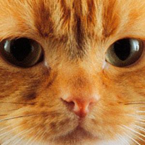 Nombres para gatos amarillos
