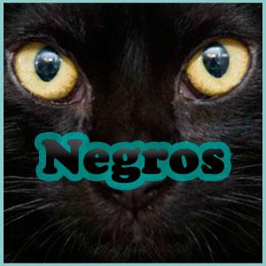 Nombres gatos negros