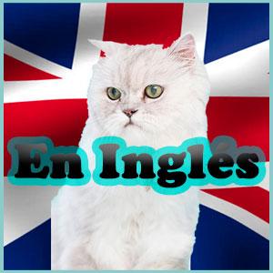 Nombres para los gatos en inglés