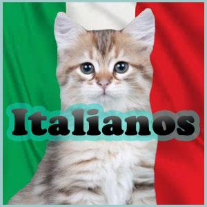 Nombres de gatos Italianos Inicio