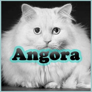 Nombres para gatos angora Inicio