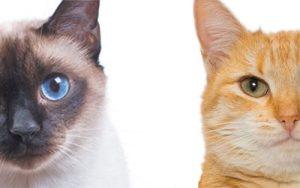 Nombres para gatos machos y su significado