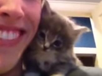 ¿Por qué adoptar a un gato?