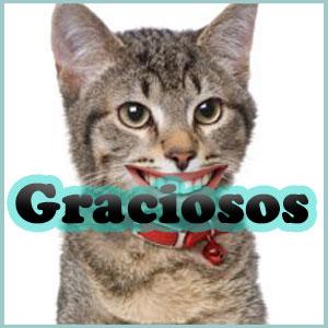 Nombres de Gatos Graciosos