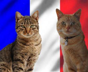 Nombres franceses para gatos
