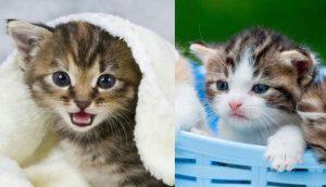 Gatos tiernos