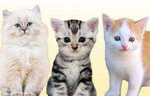 Nombres cortos de gatas