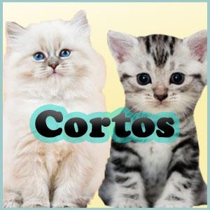 Nombres para gatos cortos