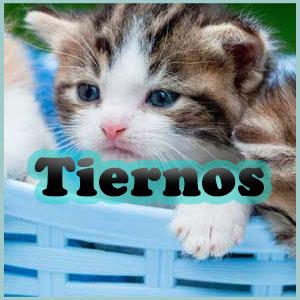 Nombres para gatos tiernos