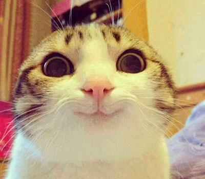 foto gato japones 1