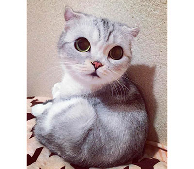 foto gato japones 3