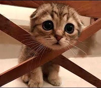 foto gato japones 15