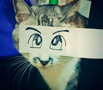 foto gato japones 5