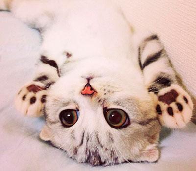 foto gato japones 8
