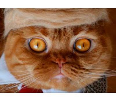 foto gato japones 9