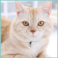 Nombres para gatos color crema