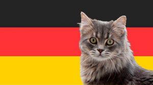 Nombres alemanes para gatos