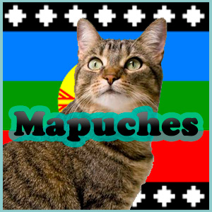 Nombres mapuches para gatos y gatas