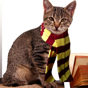 Nombres para gatos de Harry Potter
