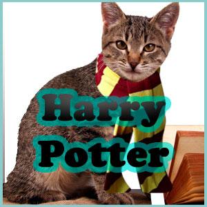 Nombres de Harry Potter para gatos