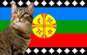 Nombres mapuches para gatos