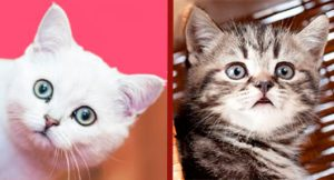 Nombres raros para gatos