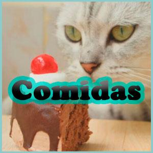 Nombres de comida para gatos